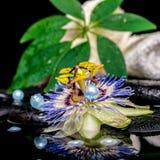 Spa inställning av passiflorablomman, staplade vita handdukar, blad henne Royaltyfria Foton
