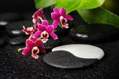 Spa inställning av zen- och teckenYin-Yang stenar, orkidé royaltyfri bild