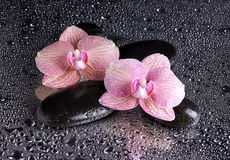 Spa kiselstenar och rosa orkidér på vått Arkivfoto