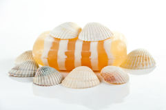 SPA kit, soap and shells Royalty Free Stock Photo