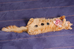 Spa kitten. Sleeps with flower and stones on sofa Royalty Free Stock Image