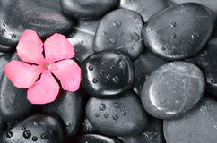 SPA  LIFE FLOWER. Spa still life with black stones and flowers stock photos