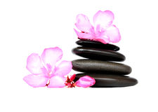 SPA LIFE FLOWER. Spa still life with black stones and flowers royalty free stock image