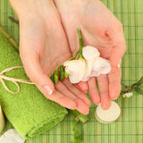 Spa manicure - hands with flower Royalty Free Stock Photography
