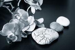Spa massage stones and orchids flowers Stock Photography