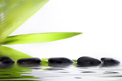 Spa massage stones in water. Conceptual wellbeing and pampering image of spa massage stones partially submerged in reflective water with green leaf fronds on a royalty free stock image