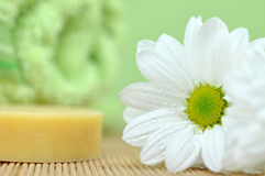 Spa Objects. Wet daisy and soap in the spa Royalty Free Stock Image