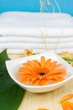 Spa objects. Orange flower in a bowl with water Stock Images
