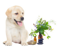Spa objects and labrador Stock Image
