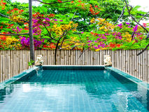 Spa onsen swimming pool flower colorful Stock Image