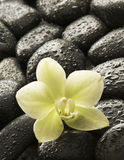 Spa orchid. White orchid on wet spa stones close up stock image