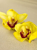 Spa orchid. Stock Photo