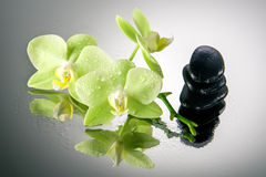 Spa stones and green orchid with water drops. Royalty Free Stock Photo