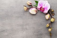Spa orchid theme objects on grey background. Stock Photos