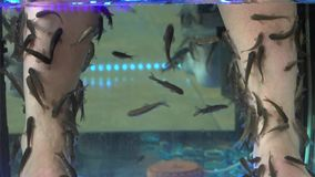 Spa pedicure. And treatment. Fish stock video footage