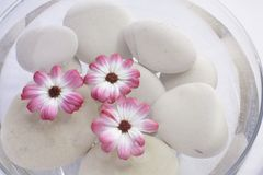 Spa pink flowers. Spa bowl with water, pink flowers and stones Royalty Free Stock Photography