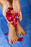 SPA procedures. Petal of the roses Stock Photo