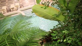 Spa resort. Thermal water in the pool and palm leaves stock video
