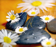 Spa rocks. And a daisy flowers Royalty Free Stock Photography
