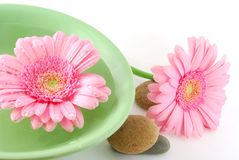 Spa salon. Spa stone beautiful pink flowers and green bowl stock images