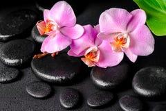 Spa sammansättning av zenen som masserar stenar, rosa orkidé arkivbild
