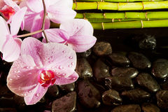 Spa scene with pink orchid Stock Image