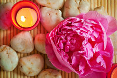 Spa scene with pink peony Stock Images