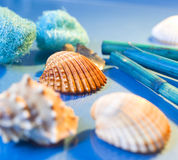 Spa sea shells Stock Photos