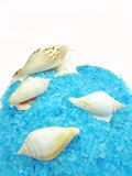 Spa sea shells and salt Royalty Free Stock Photos