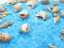 Spa sea shells and salt Royalty Free Stock Photography