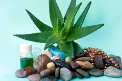 Spa set with aloe and massage oil Stock Photos