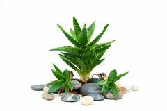 Spa set aloe vera Royalty Free Stock Images