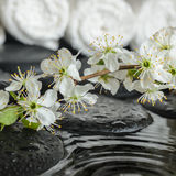 Spa set of blooming fresh twig plum on zen stones Royalty Free Stock Photography