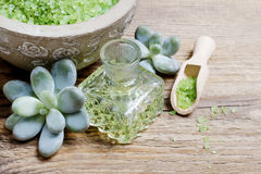 Spa set: green sea salt, liquid soap and succulent plants Royalty Free Stock Image