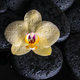Spa set of yellow orchid (phalaenopsis) on zen stones with drops Stock Photos