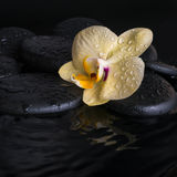 Spa set of yellow orchid (phalaenopsis), zen stones with drops Stock Photos
