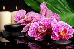 Spa setting of blooming twig stripped violet orchid Royalty Free Stock Photos