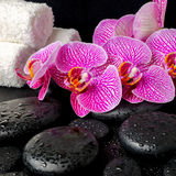 Spa setting of blooming twig of stripped violet orchid Stock Photos