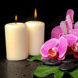 Spa setting of blooming twig violet orchid (phalaenopsis) Royalty Free Stock Photo