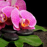 Spa setting of blooming twig violet orchid (phalaenopsis) Royalty Free Stock Images