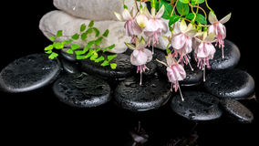 Spa setting of branch pink fuchsia flower, towels, leaf fern  an Stock Image
