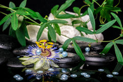 Spa setting of passiflora flower, branches, towels, zen basalt s Royalty Free Stock Photo