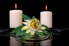 Spa setting of passiflora flower, green leaf with drop. And candles on zen stones in ripple reflection water, closeup stock images