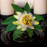 Spa setting of passiflora flower, green leaf with drop, towels Stock Photography