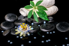 Spa setting of passiflora flower, green  leaf, towels, zen basal Stock Photography