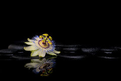 Spa setting of passiflora flower on zen stones with reflection Royalty Free Stock Image