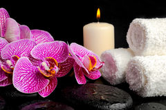 Spa setting of twig stripped violet orchid (phalaenopsis ) Royalty Free Stock Photo