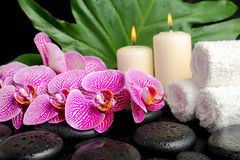 Spa setting of twig stripped violet orchid (phalaenopsis ) Stock Photography