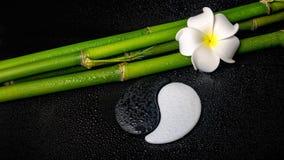 Spa setting of white frangipani flower, symbol Yin Yang  and nat Stock Photos