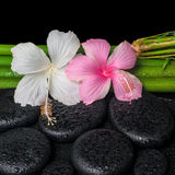 Spa setting of white, pink hibiscus flowers and natural bamboo Royalty Free Stock Photography